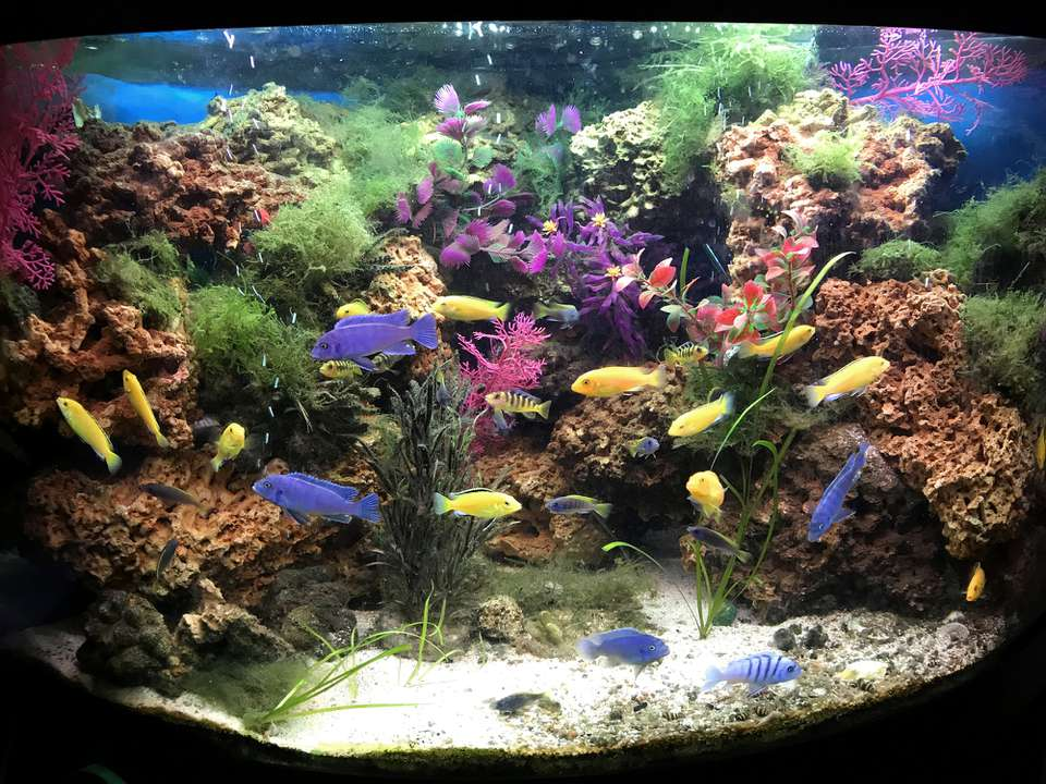 Cichlid tank decorated with live and fake plants