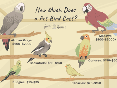 How Long Do Parrots and Other Pet Birds Live?
