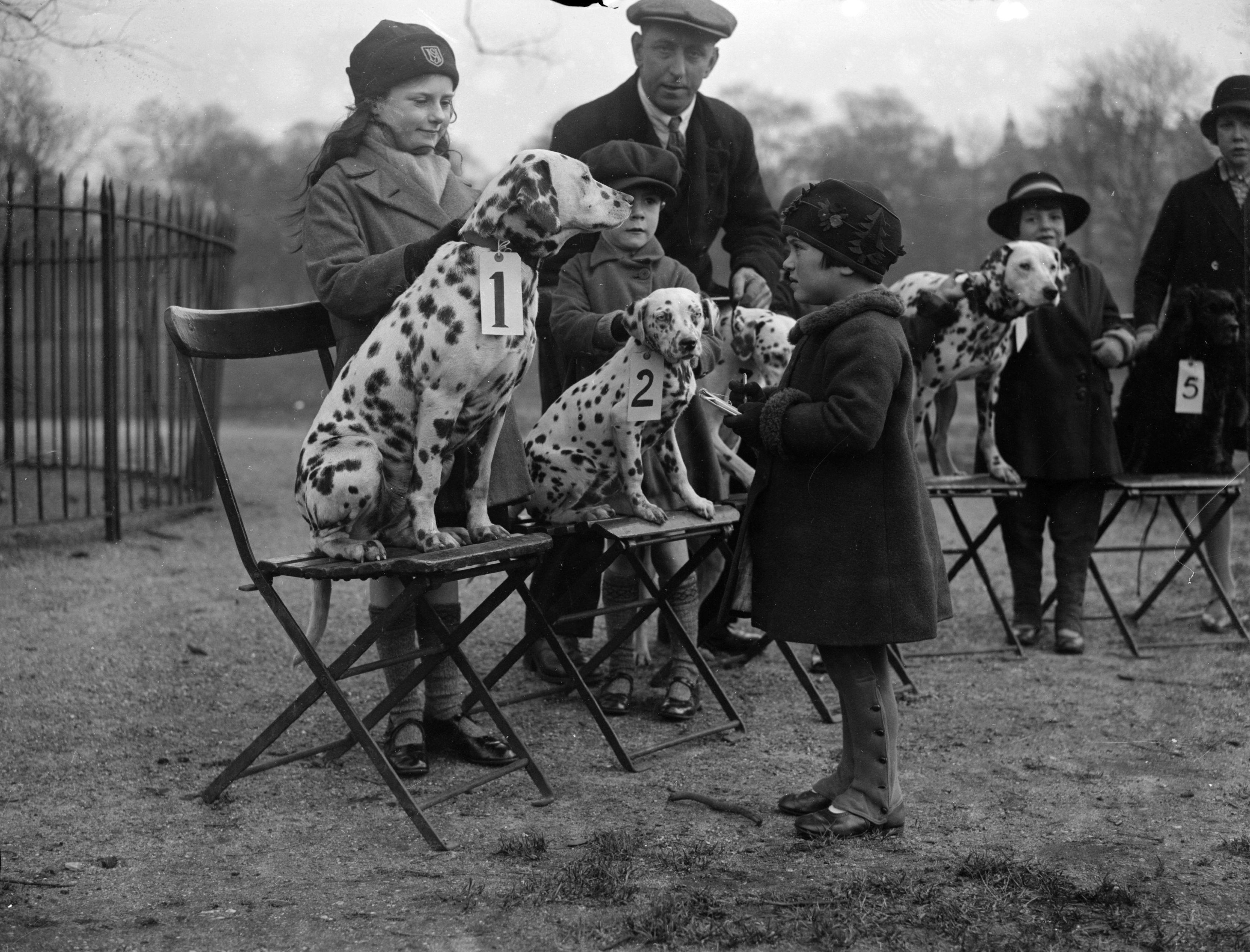 Dalmatian dog show