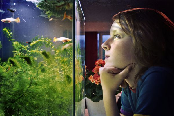 A child looking at a fish tank