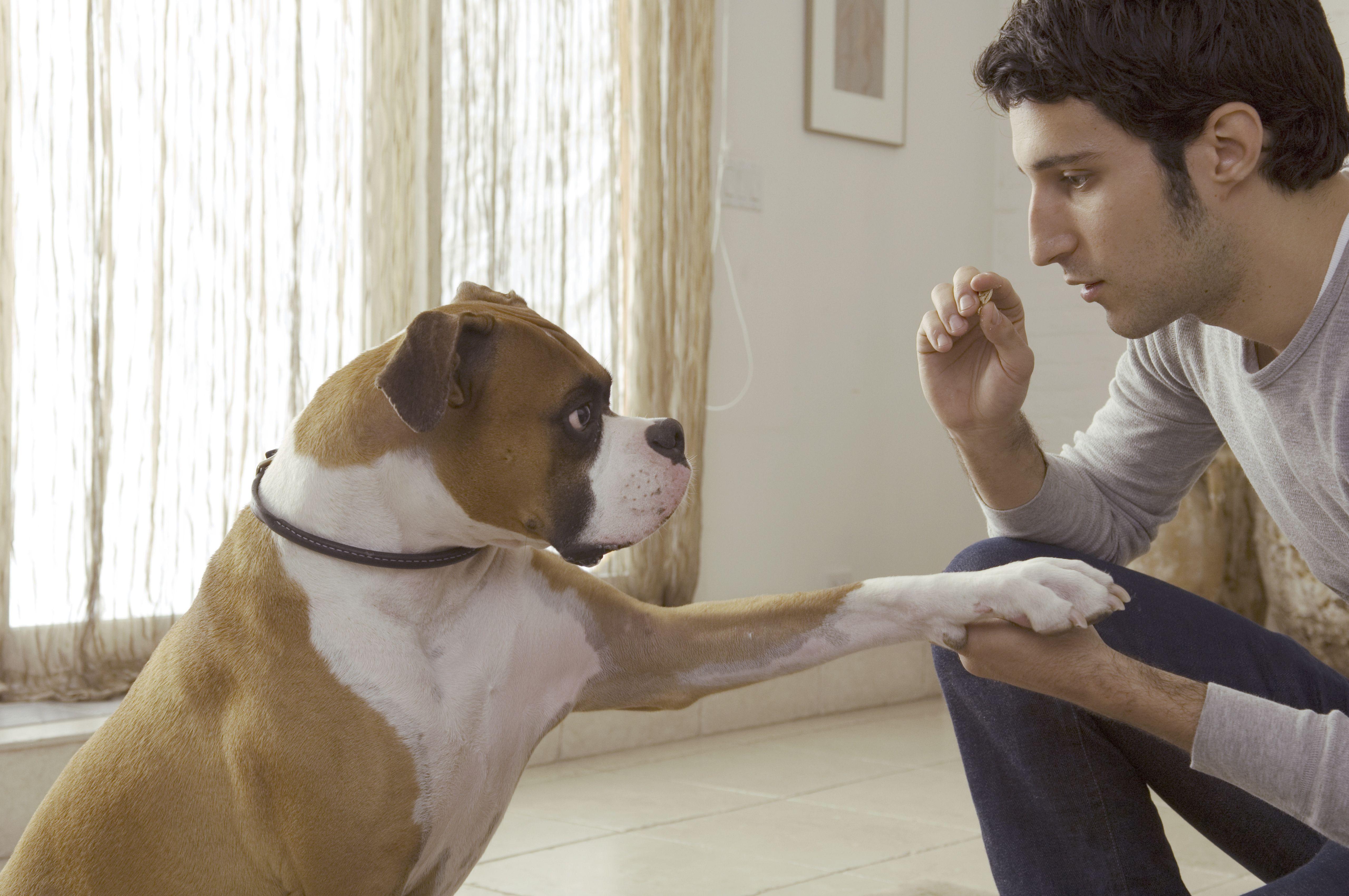 Dog putting paw on man?s hand