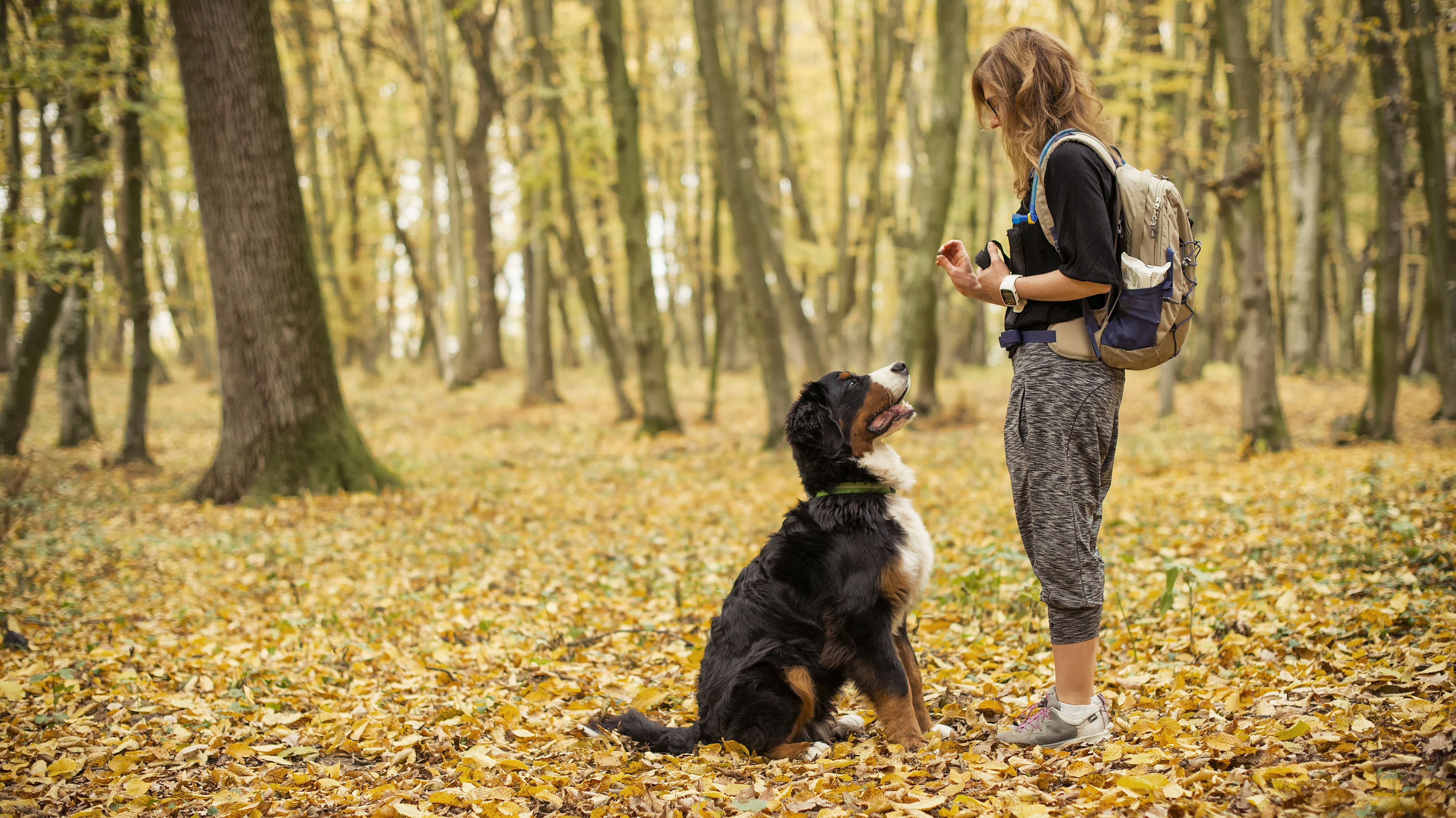 Dog Training Supplies and Tools