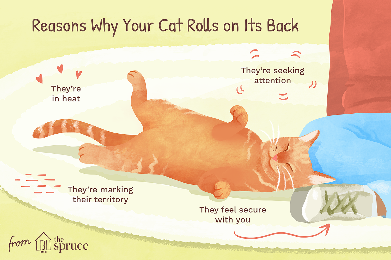Why Do Cats Roll On The Ground