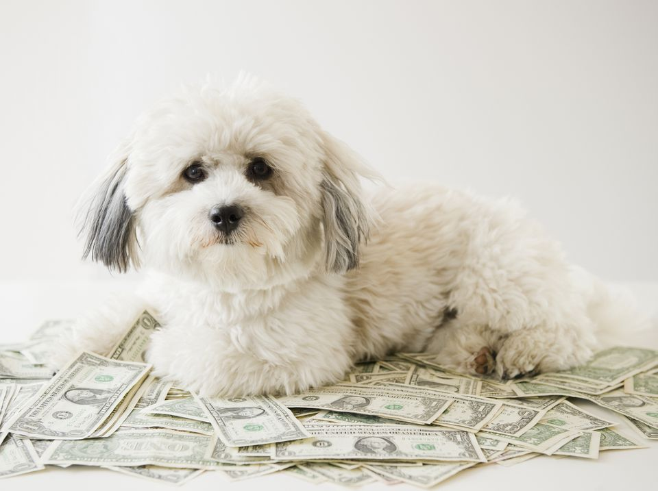Dog lying on pile of money.
