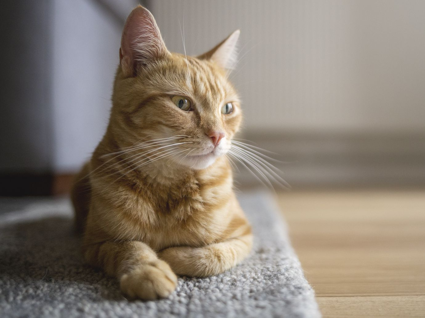 What To Do If Your Cat Is Vomiting White Foam