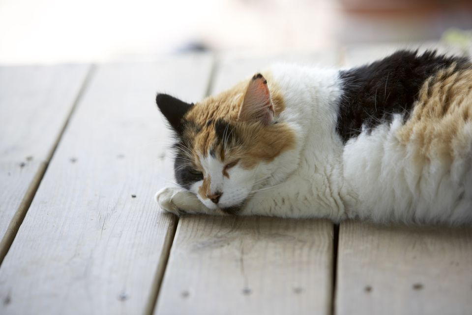 Cat lying on porch in the shade