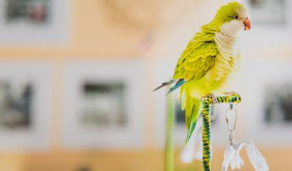 Dodo the Monk bird