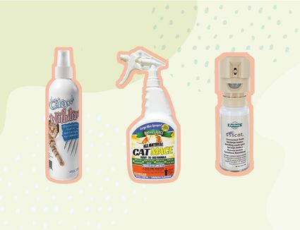 Best Cat Repellents