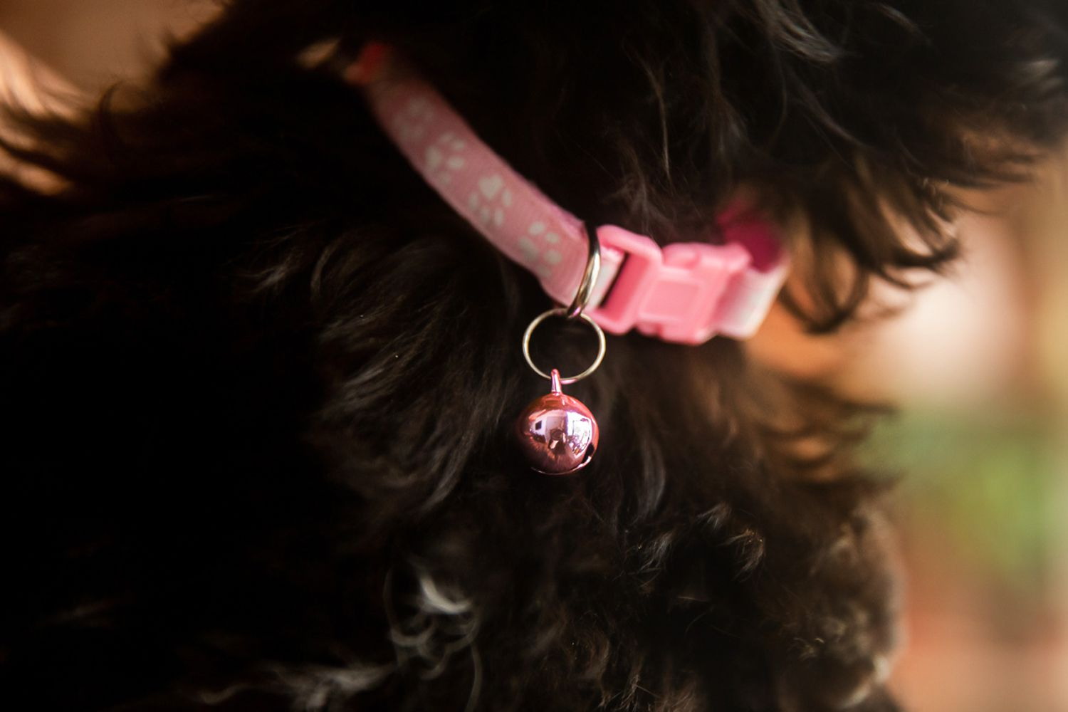 Pink dog collar with pink bell on black puppy's neck closeup