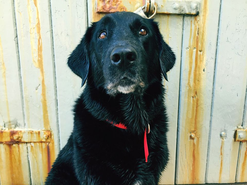 Close-Up Of Black Dog Sitting Against Closed Metallic Door