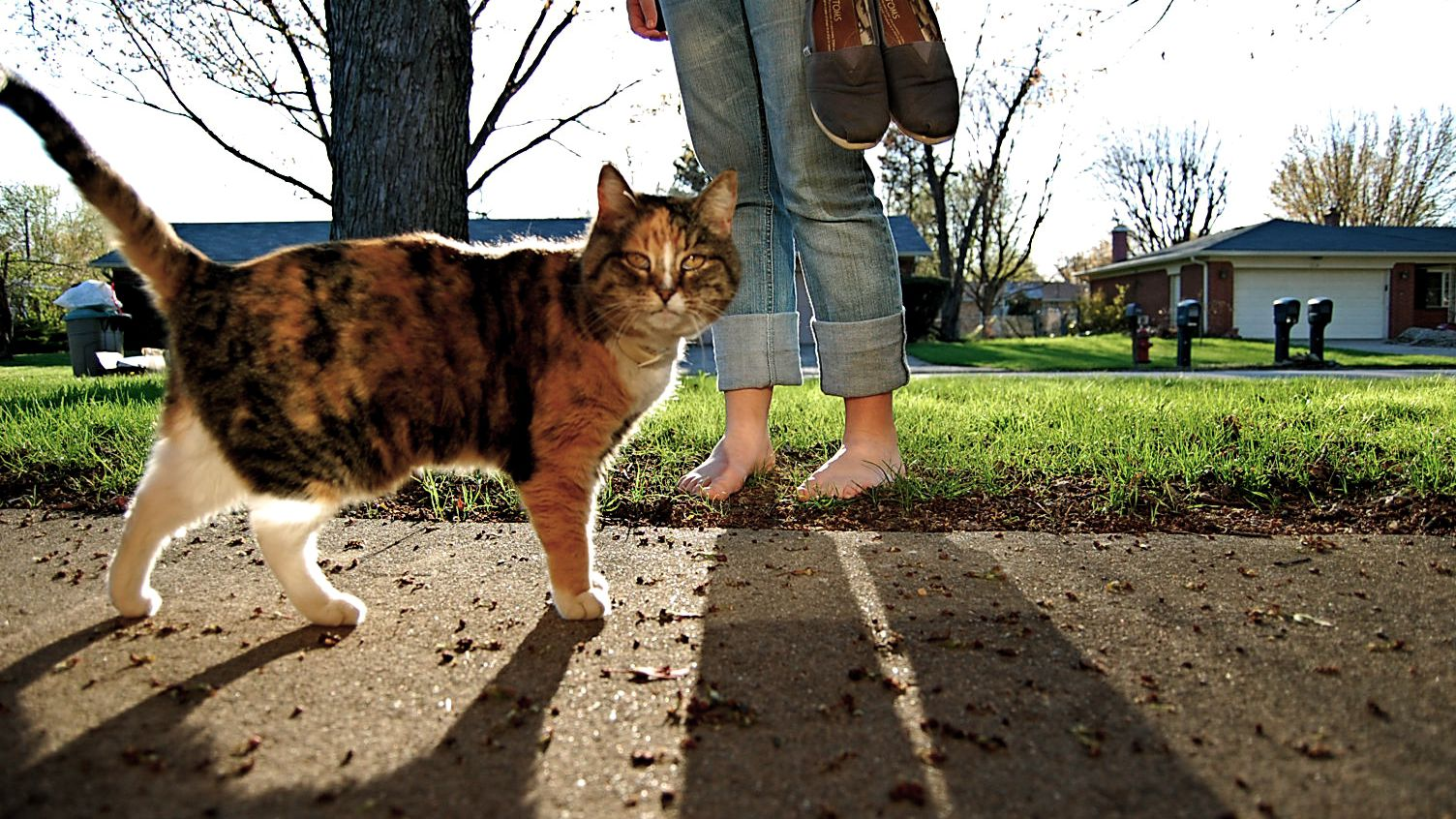 Cat Allergies - Top Ten Steps for Reducing Allergies to Cats