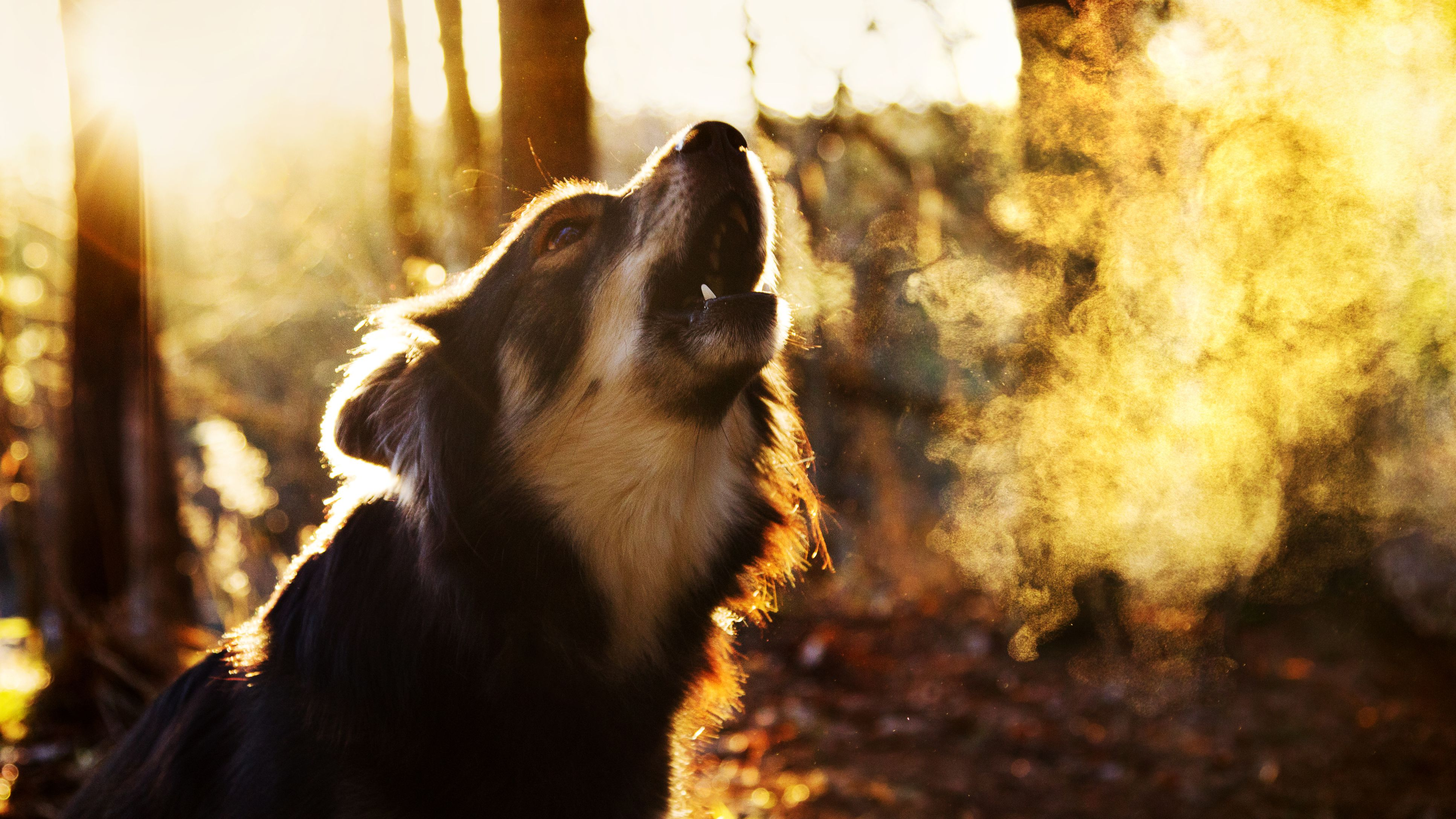 Reasons Why Dogs Bark Excessively and How to Stop It