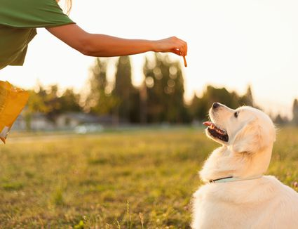 The 9 Best Dog Foods For Sensitive Stomachs Of 2020