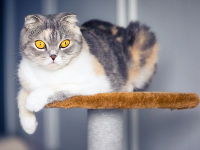 The 7 Best Cat Trees of 2019