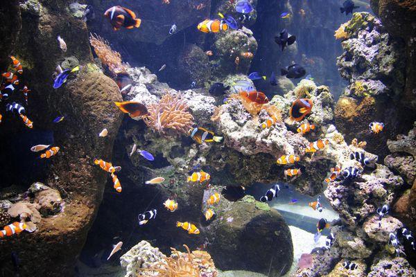 Aquarium with multiple colors of fish