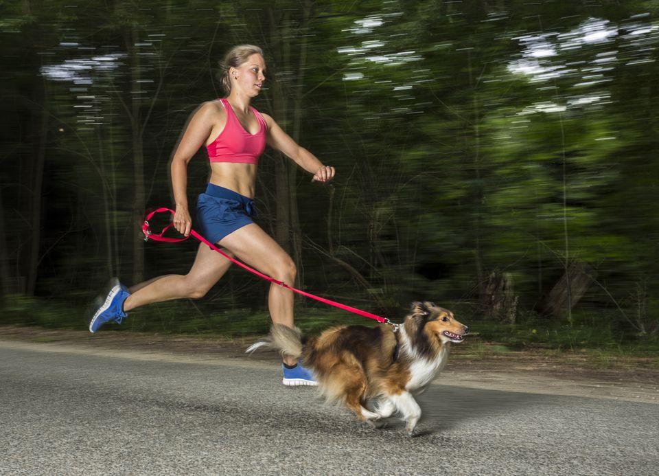 mujer corriendo con perro, un sheltie