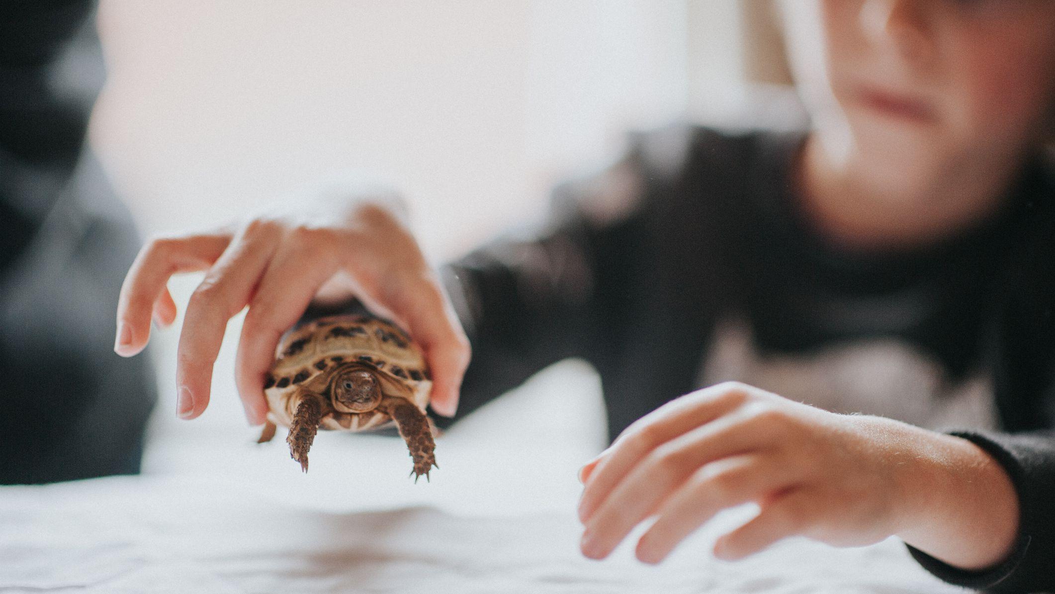 Turtle and Tortoise Lighting
