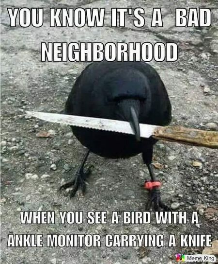 The Absolutely Best Bird Memes Ever