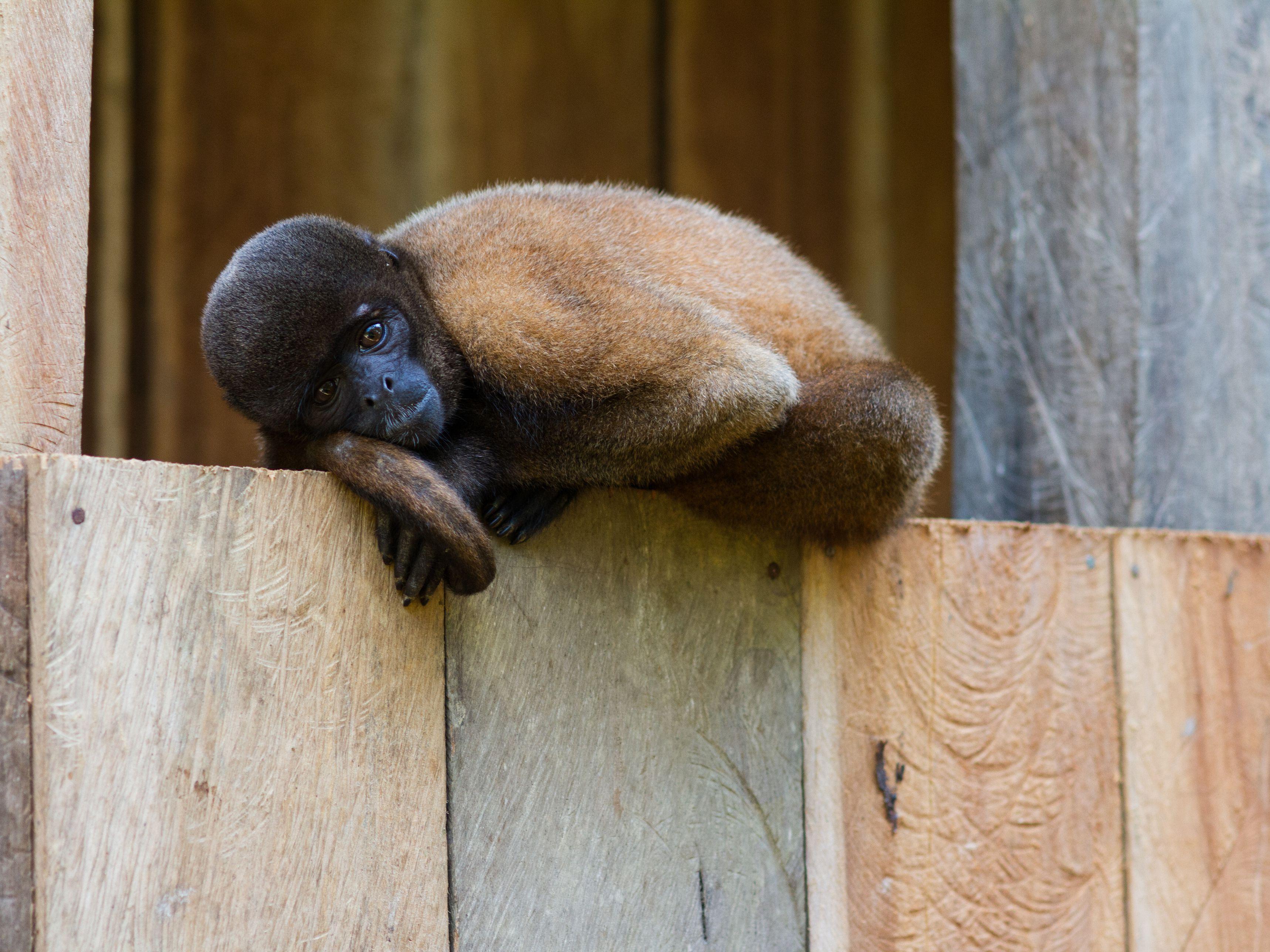 The 2012 Ohio Exotic Pet Law Changes