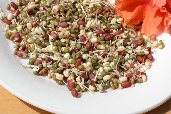 Growing Sprouts At Home Is Healthy