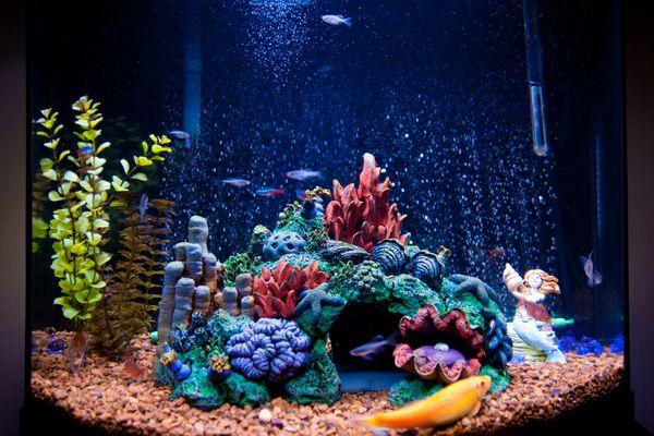Lit fish tank