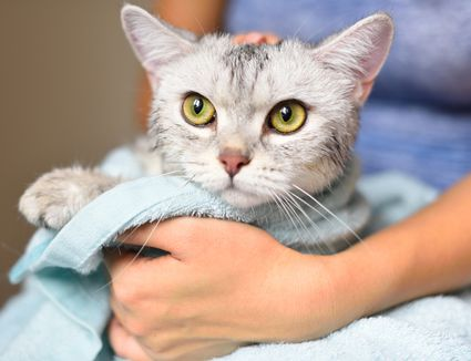 kitten drying off in towel after bath