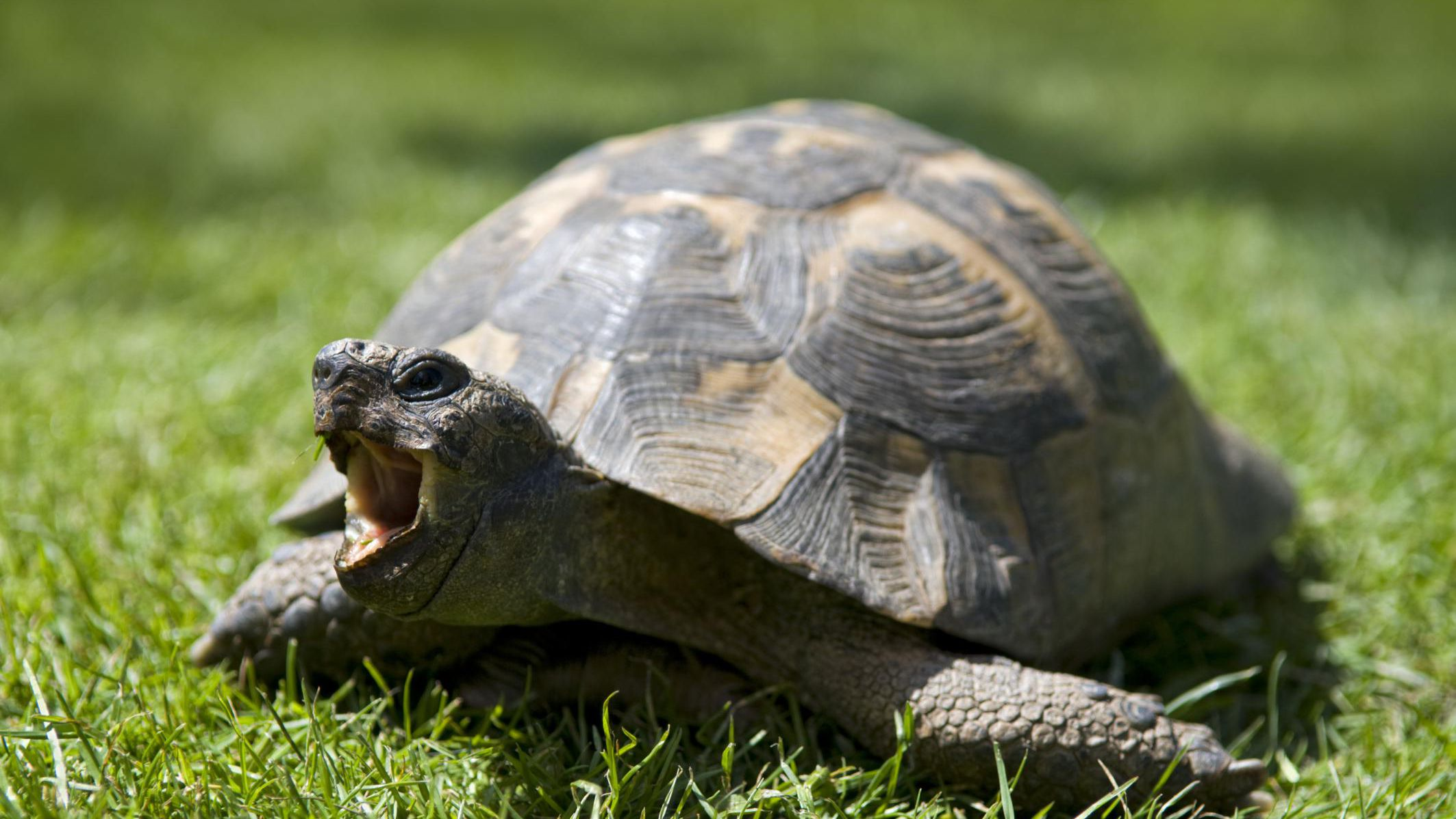 An Introduction To Pet Tortoises