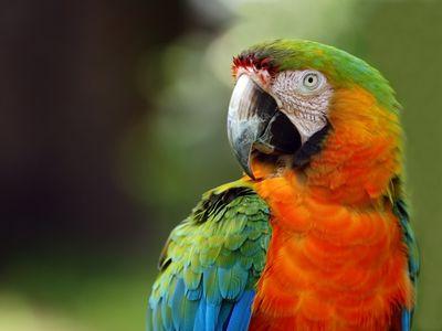 5 of the Quieter Pet Bird Species