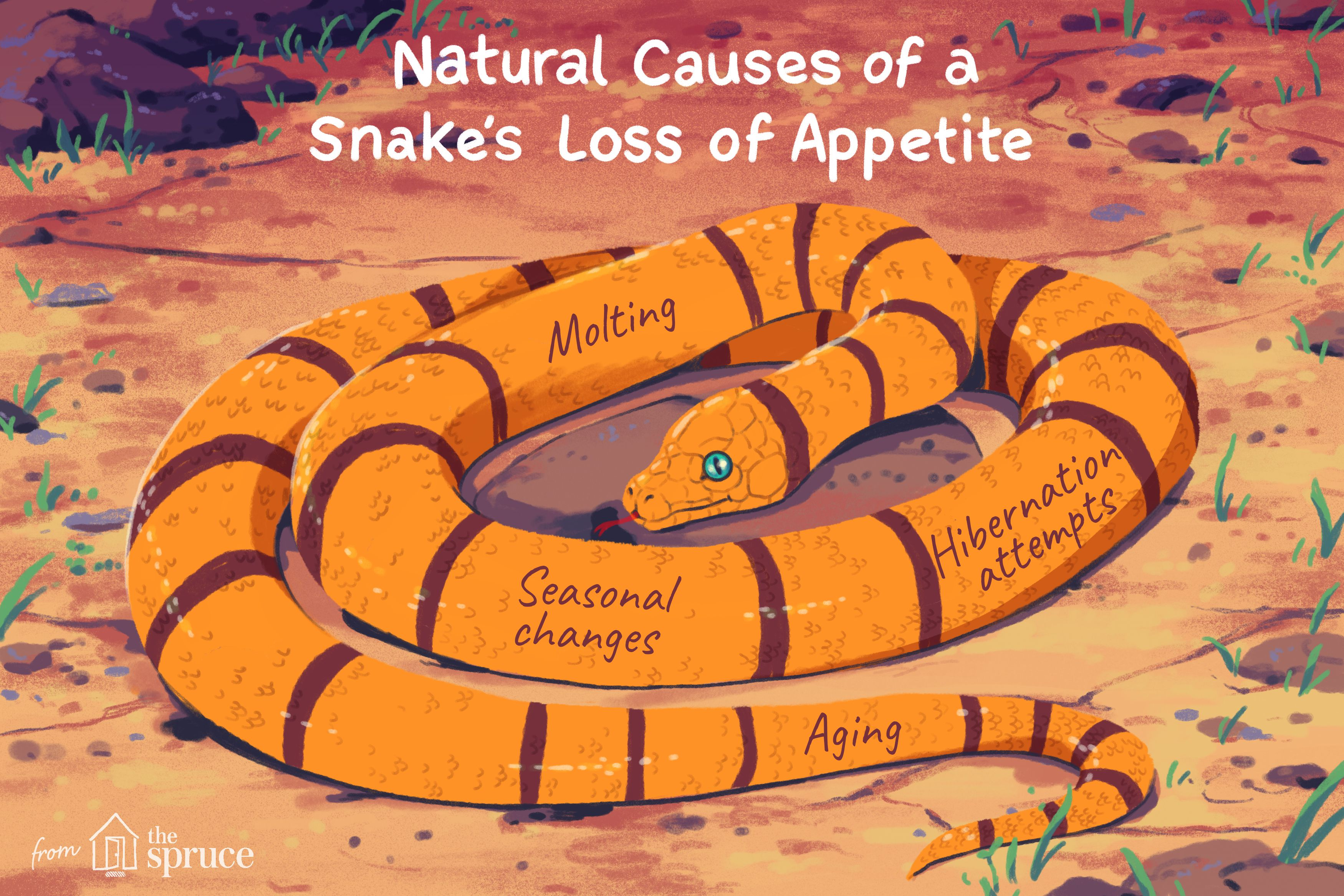 What to Do if Your Snake Has Lost Its Appetite