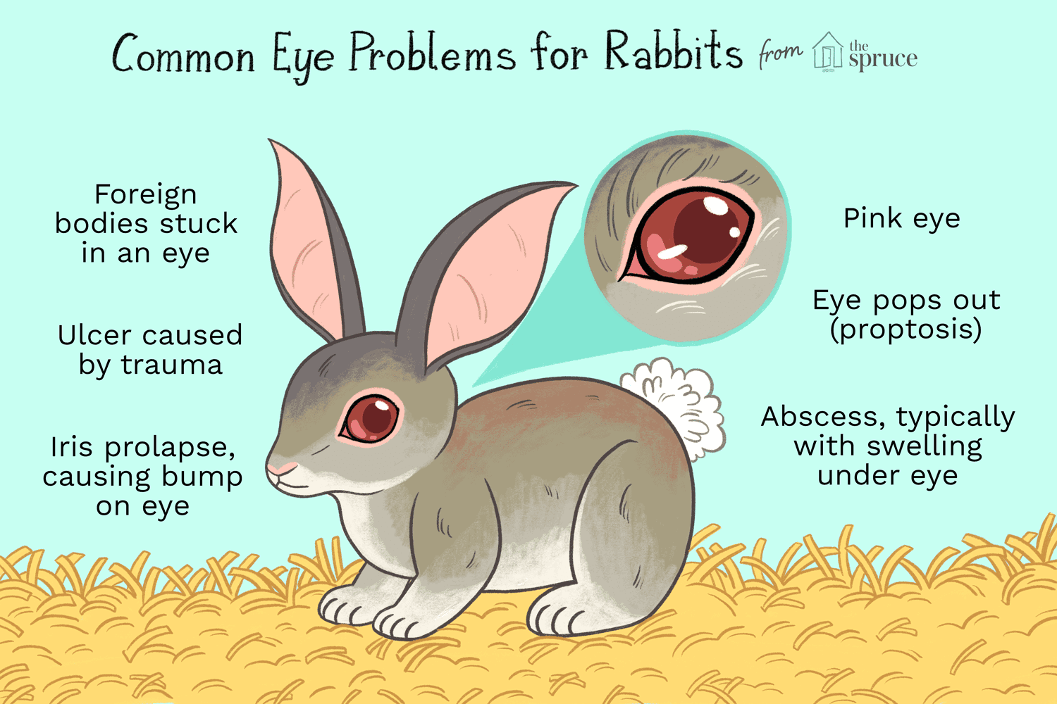 What To Do If Your Rabbit Has Eye Problems