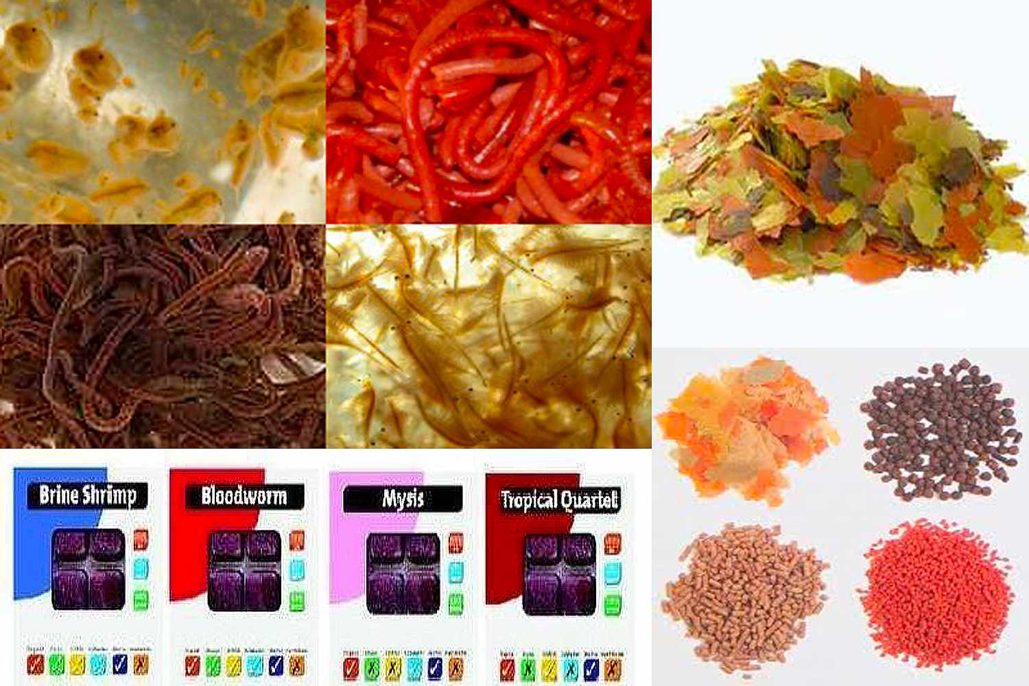 Food that makes Tetras colorful
