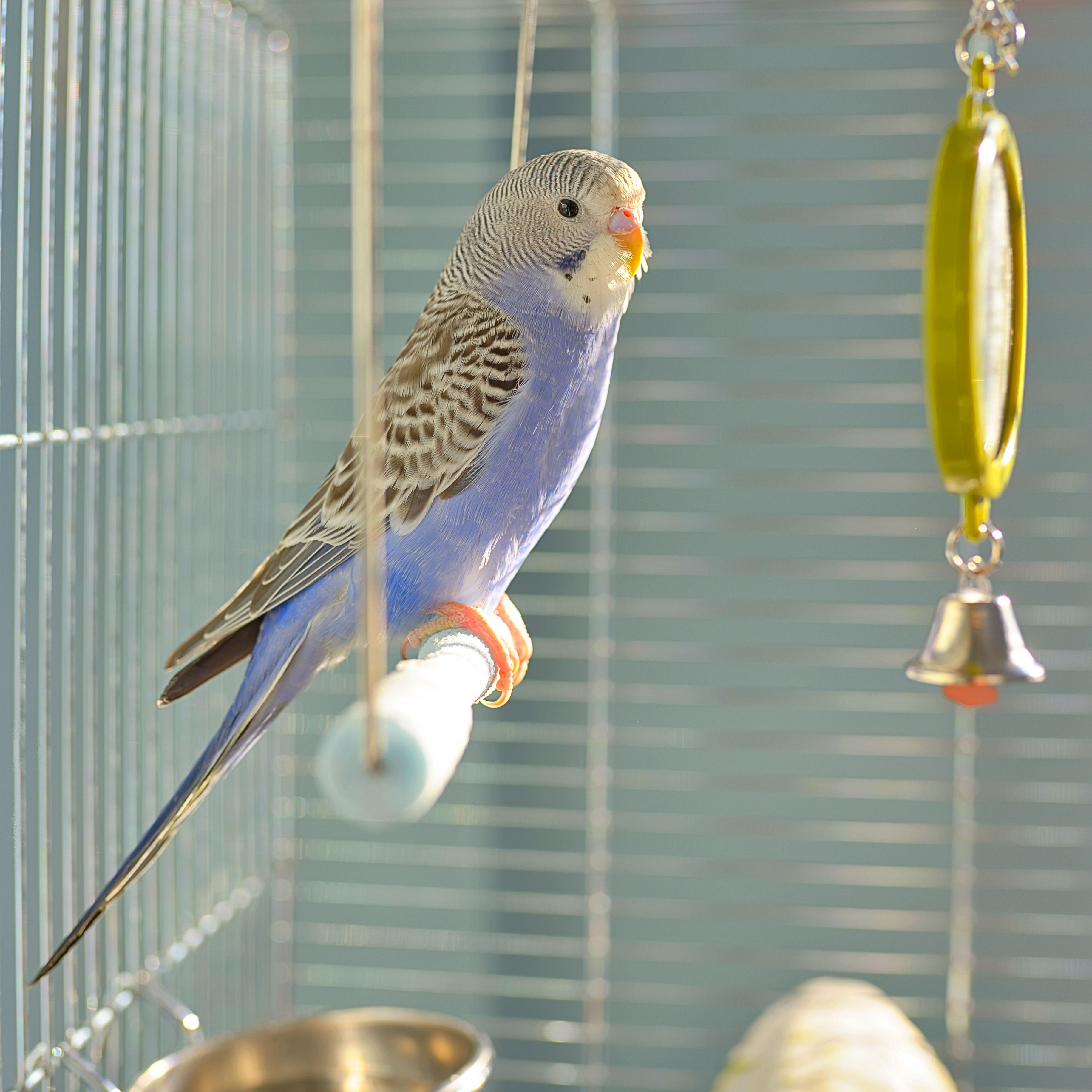 How to Keep Parrots and Other Birds from Getting Bored