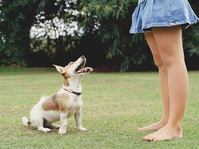 How to Train Your Dog With Positive Reinforcement