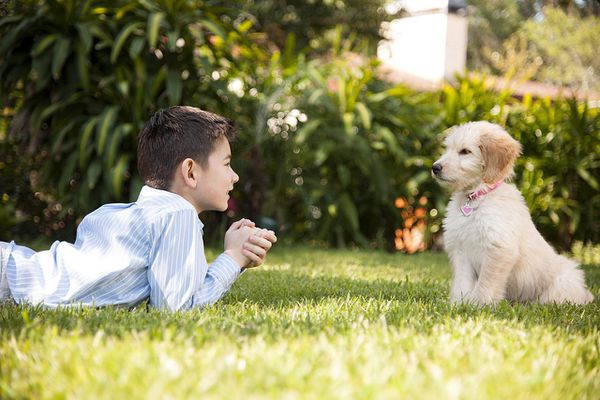 Happy Young half Asian Korean boy laying and playing face to face in the green grass with his boy's best friend golden retreiver puppy girl in the front yard of his grandparents house
