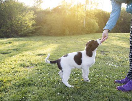 Woman feeding a puppy a treat in a park