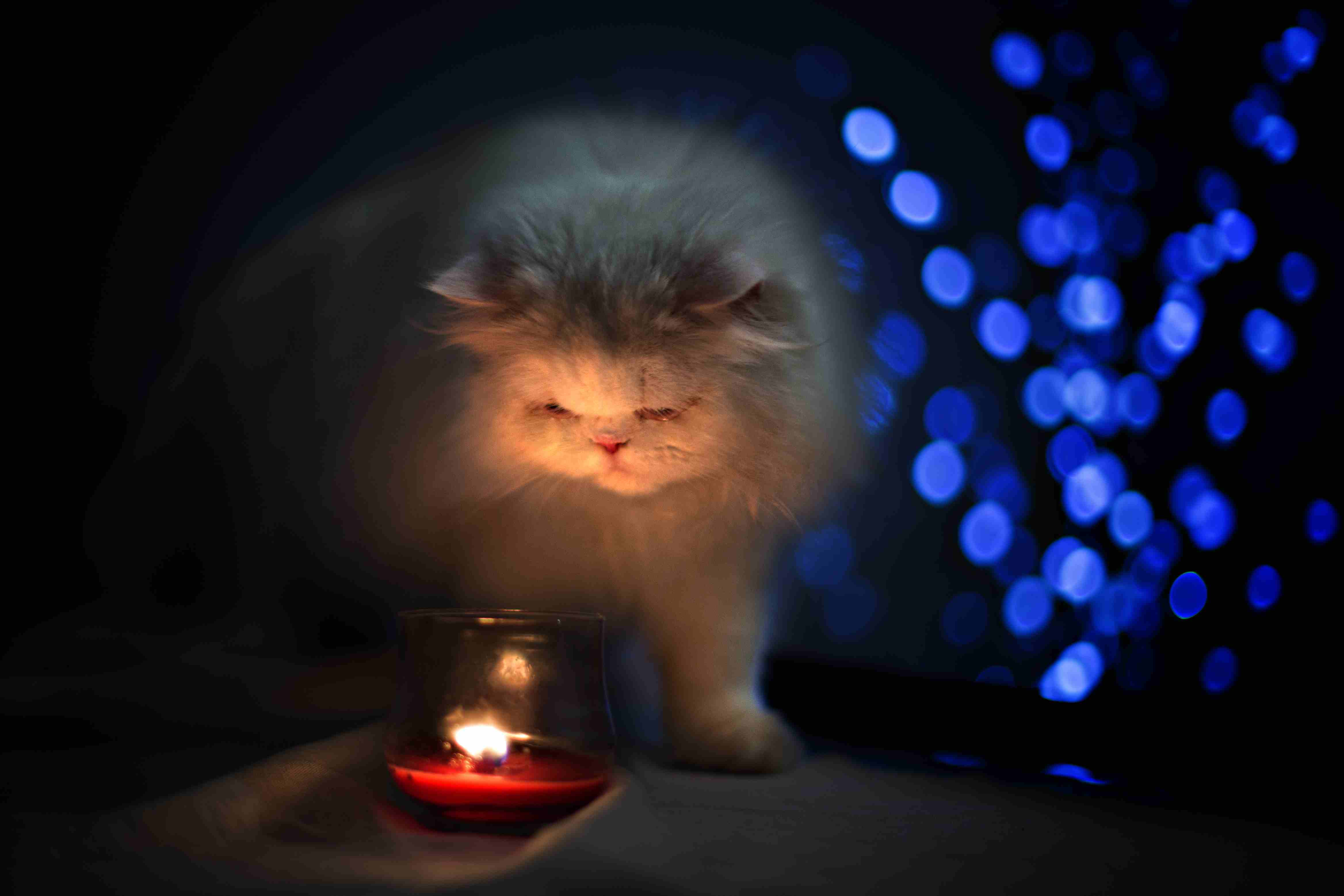 White persian cat facing a red candle with blue bo