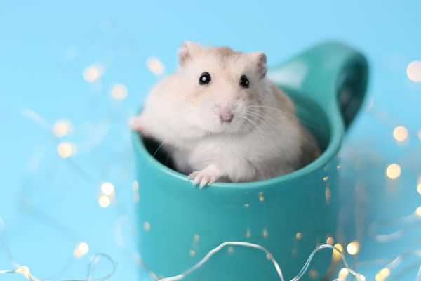 Hamster portrait