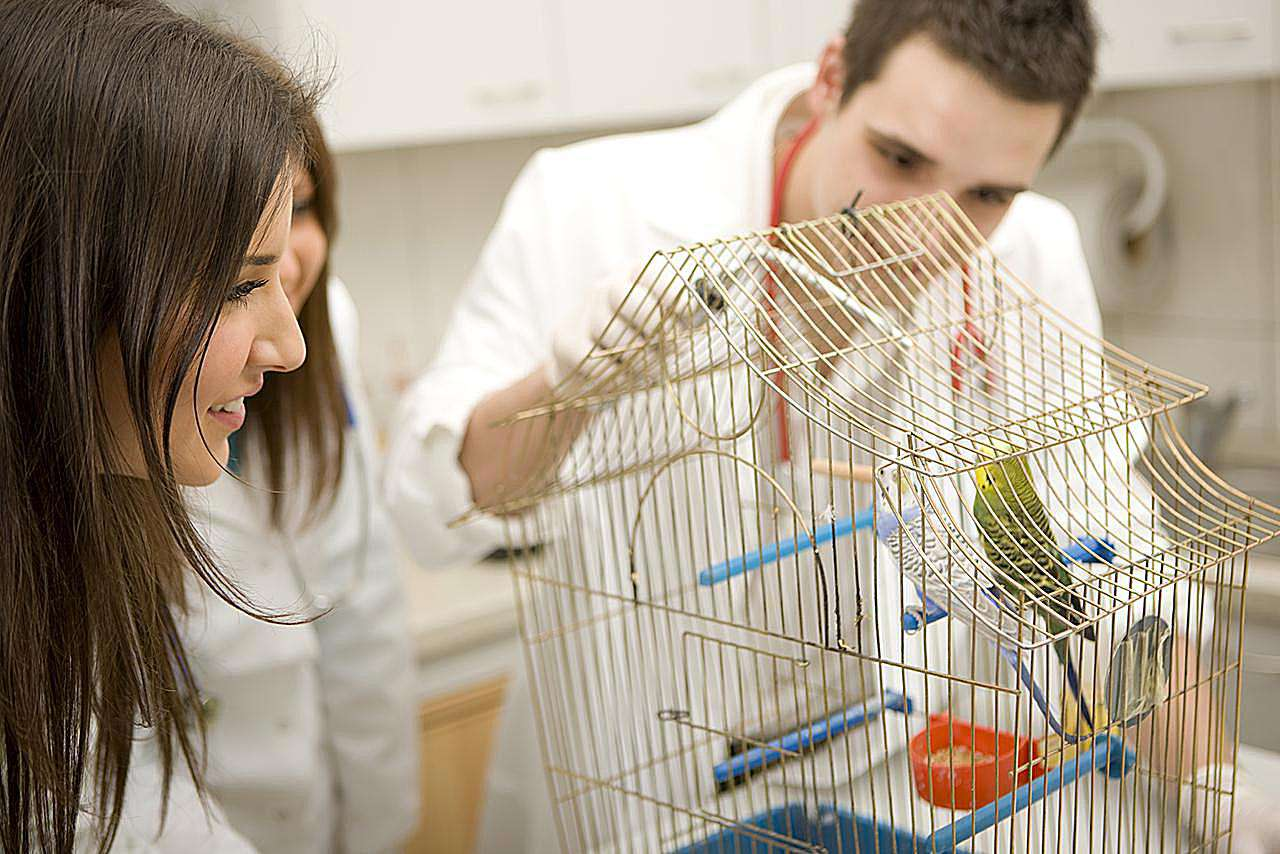 Veterinarian examining parrots, focus on female veterinarian