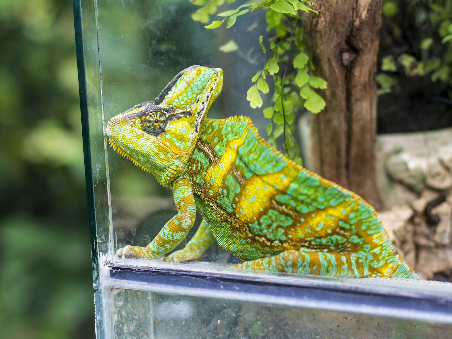 Live Terrarium Plants With Reptiles And Amphibians