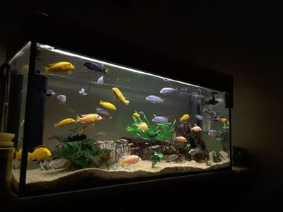 tips for changing the water in your aquarium