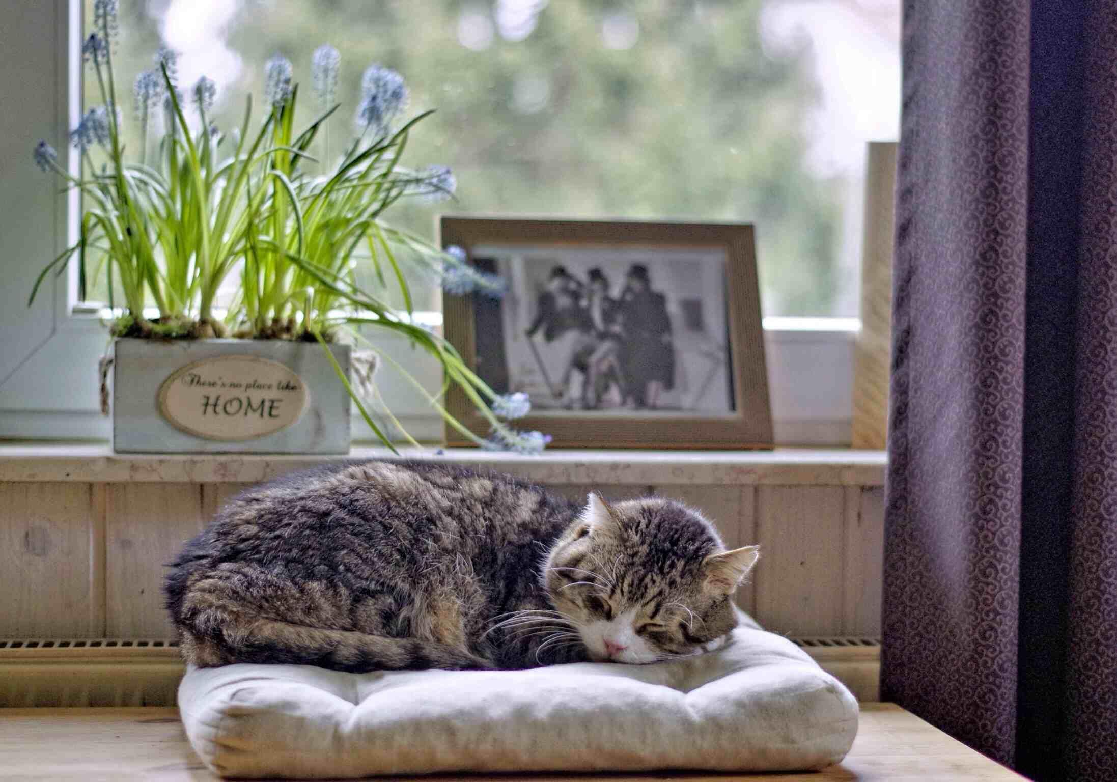 Gato durmiendo en la cama contra la ventana en casa