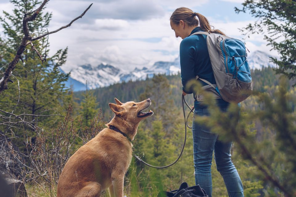 dog hiking with owner