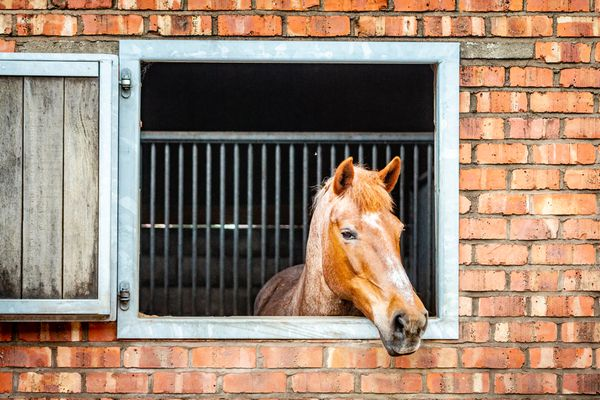 A Horse In A Stable Looking Out Of The Window