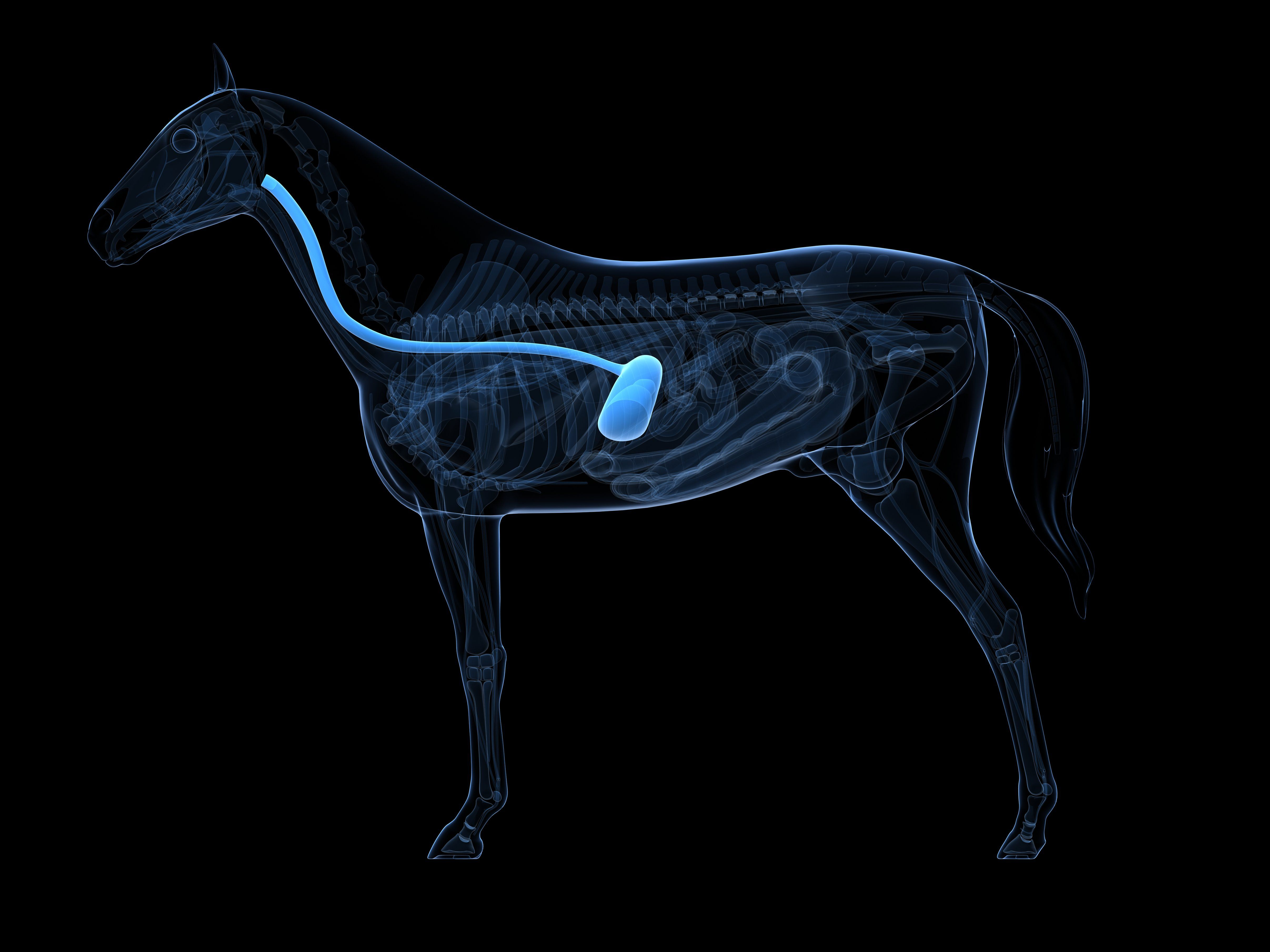 Horse skeleton, artwork