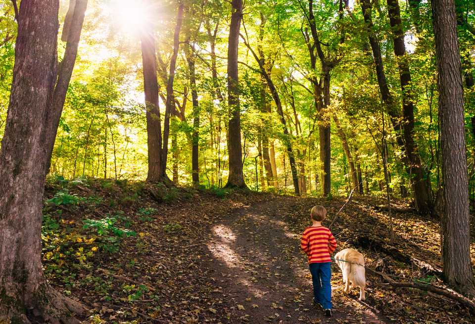 Boy walking dog in forest