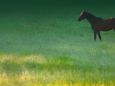 What to Do if Your Horse Has Diarrhea