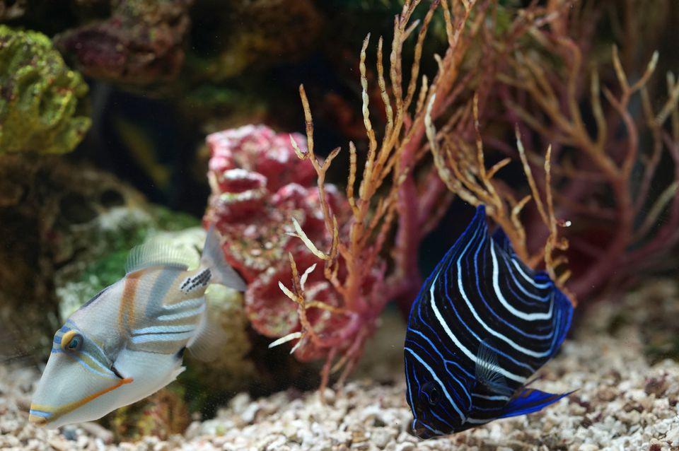 salt water fish in aquarium