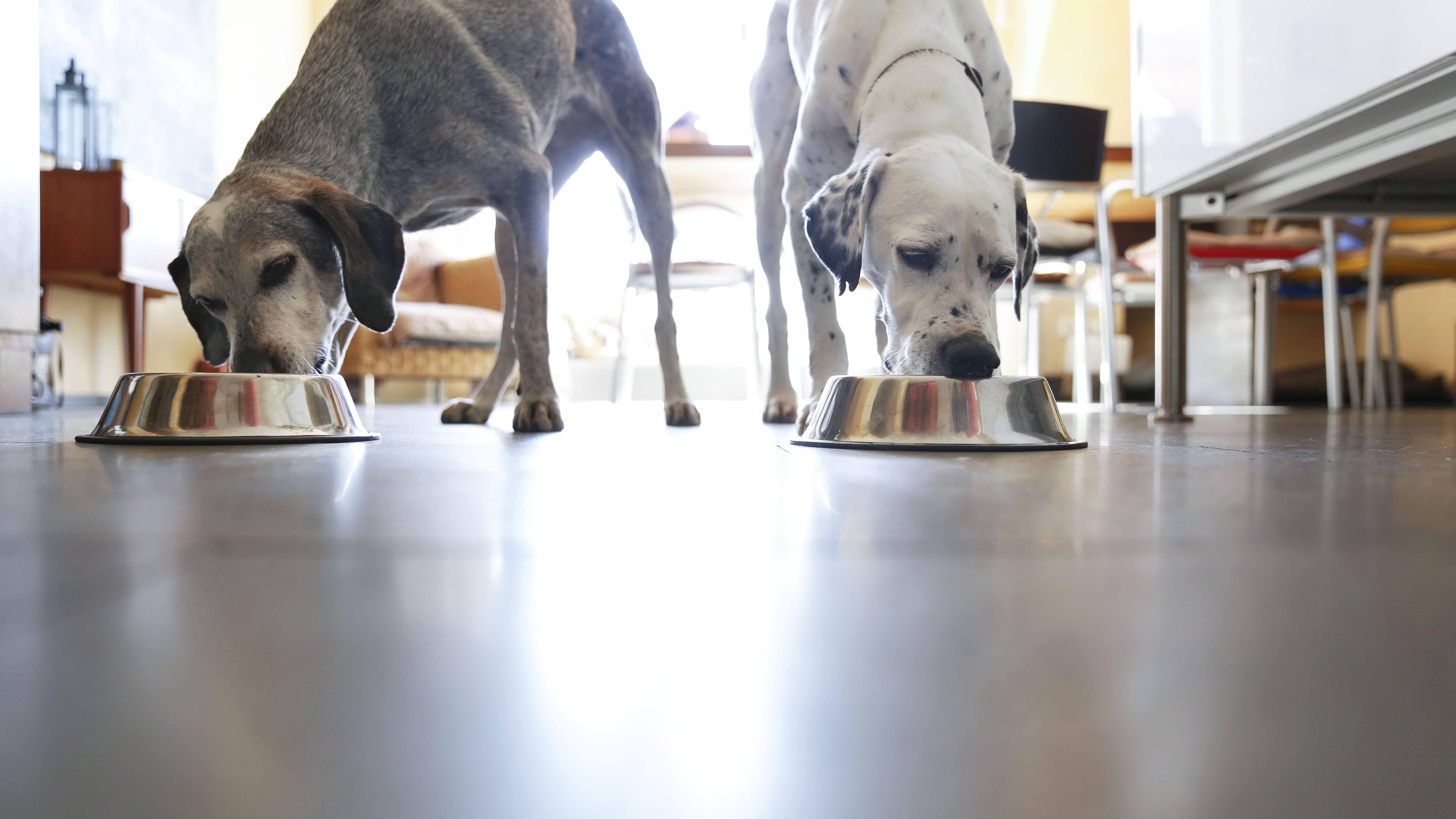 The 9 Best Dog Foods for Sensitive Stomachs of 2019