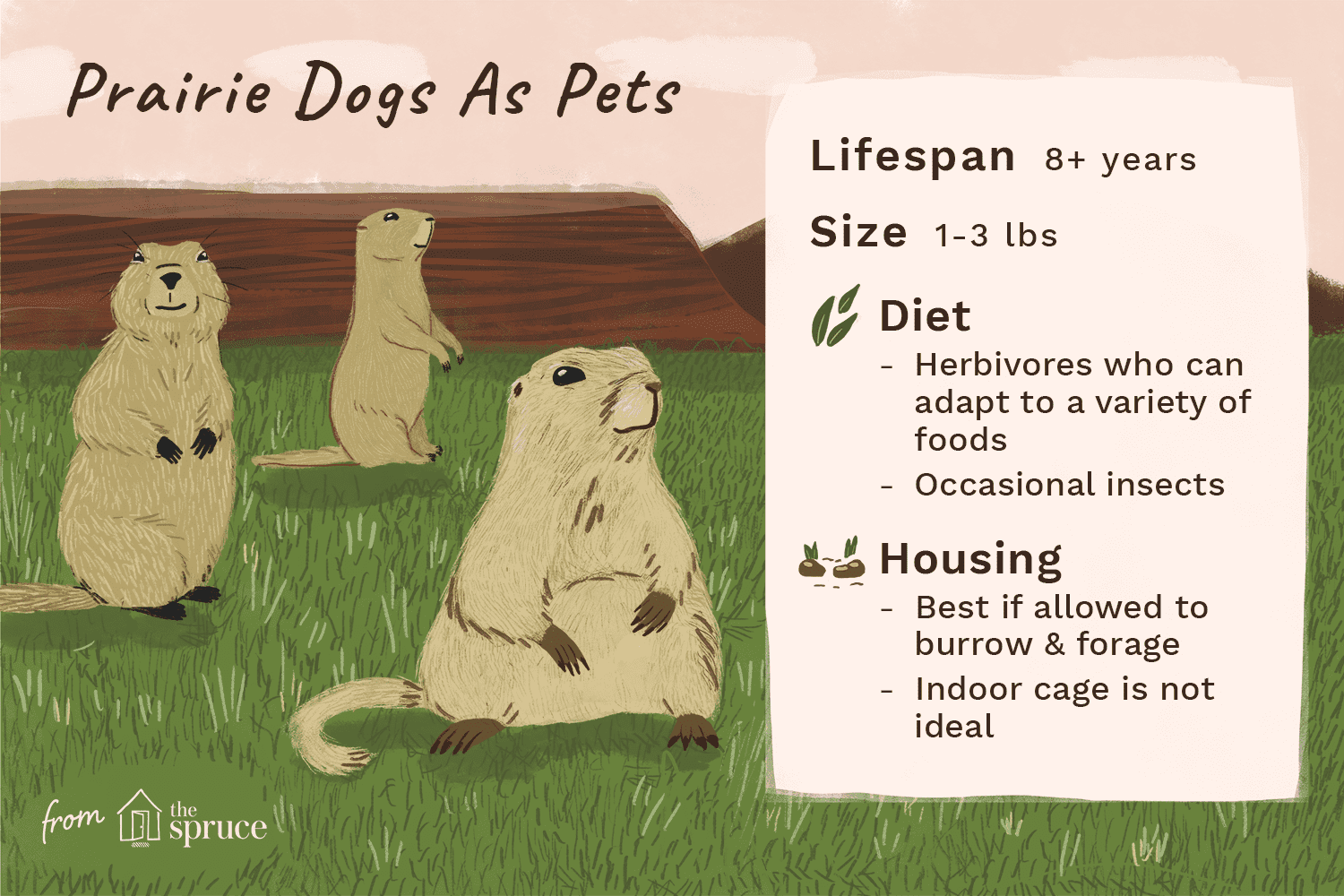 Prairie dogs as pets illustration
