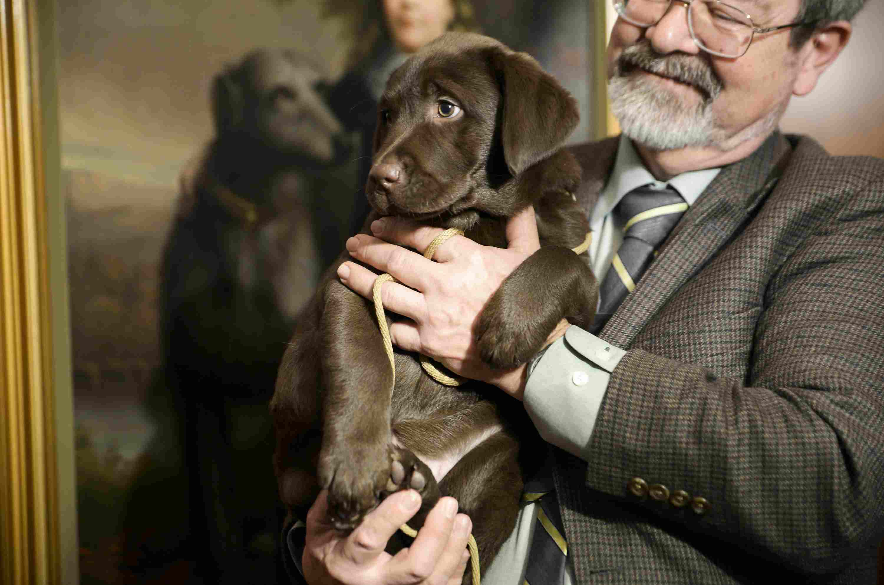 American Kennel Club Most Popular Breed 2015 Announcement